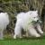 Hundespielzeug, Raffaelo Haustier Hund Seil Spielzeug Baumwolle Seil Hund Tug Krieg Seil Spielzeug Set Dental Zähne Reinigung Chew Spielzeug für Kleine und Mittlere Hunde - Packung mit 4 PCS - 4
